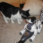 Azrael with aibo